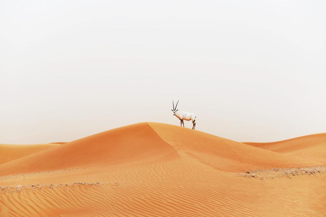 fashiioncarpet-wüsten-bilder-dubai