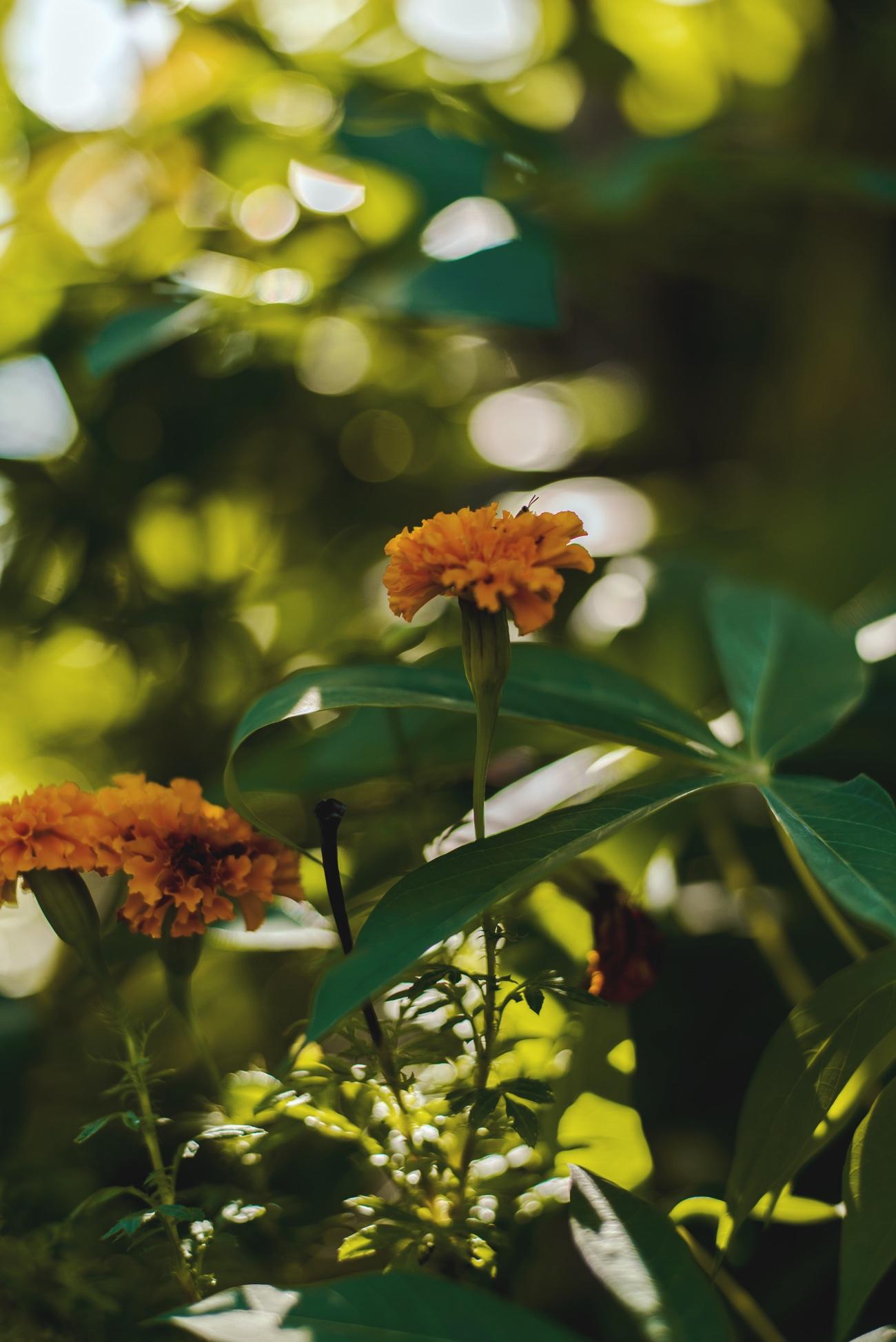 palmen-landschafts-fotografie-bali-natur-fashiioncarpet