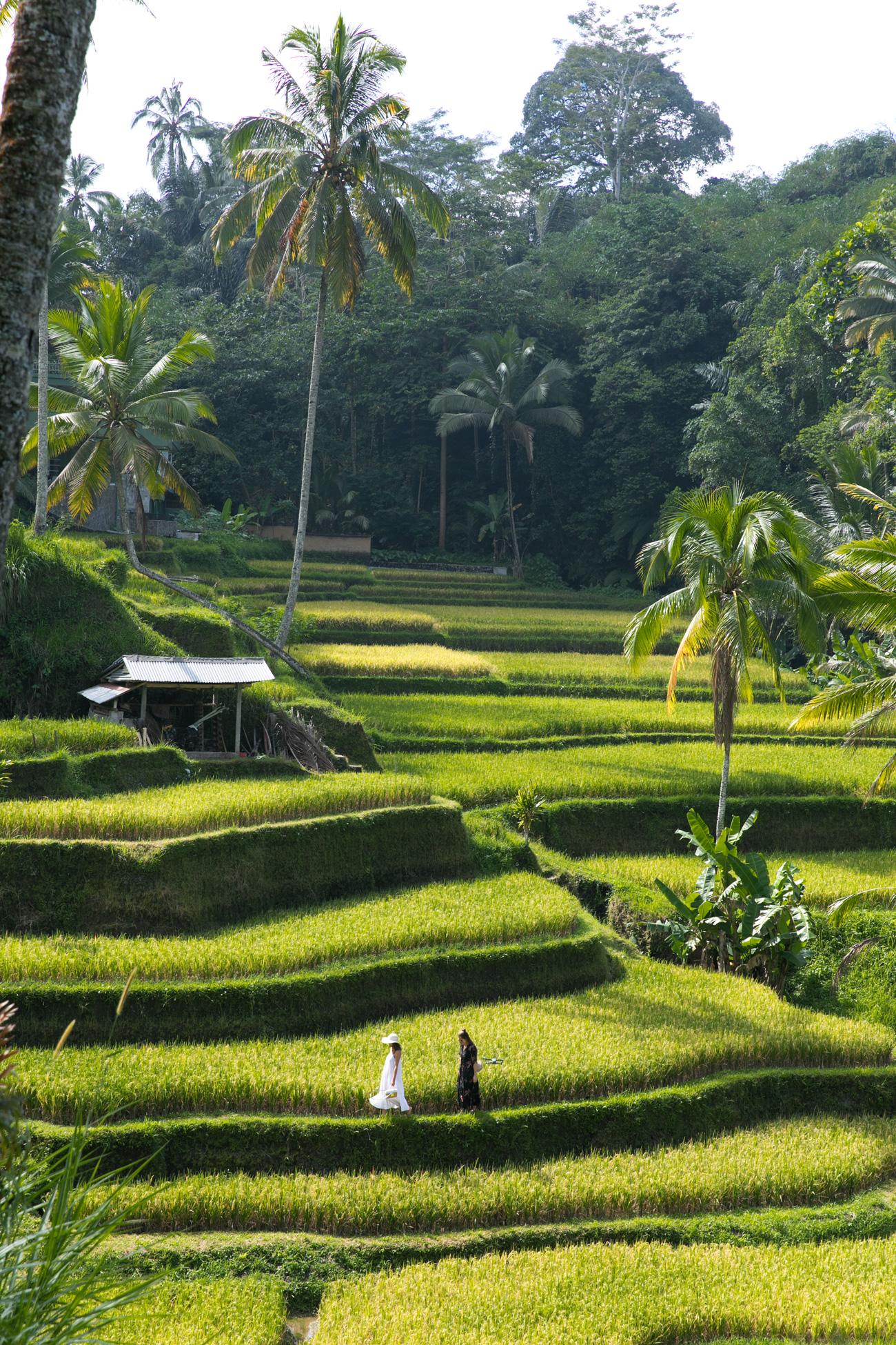 15-lustige-und-kuriose-fakten-über-Bali