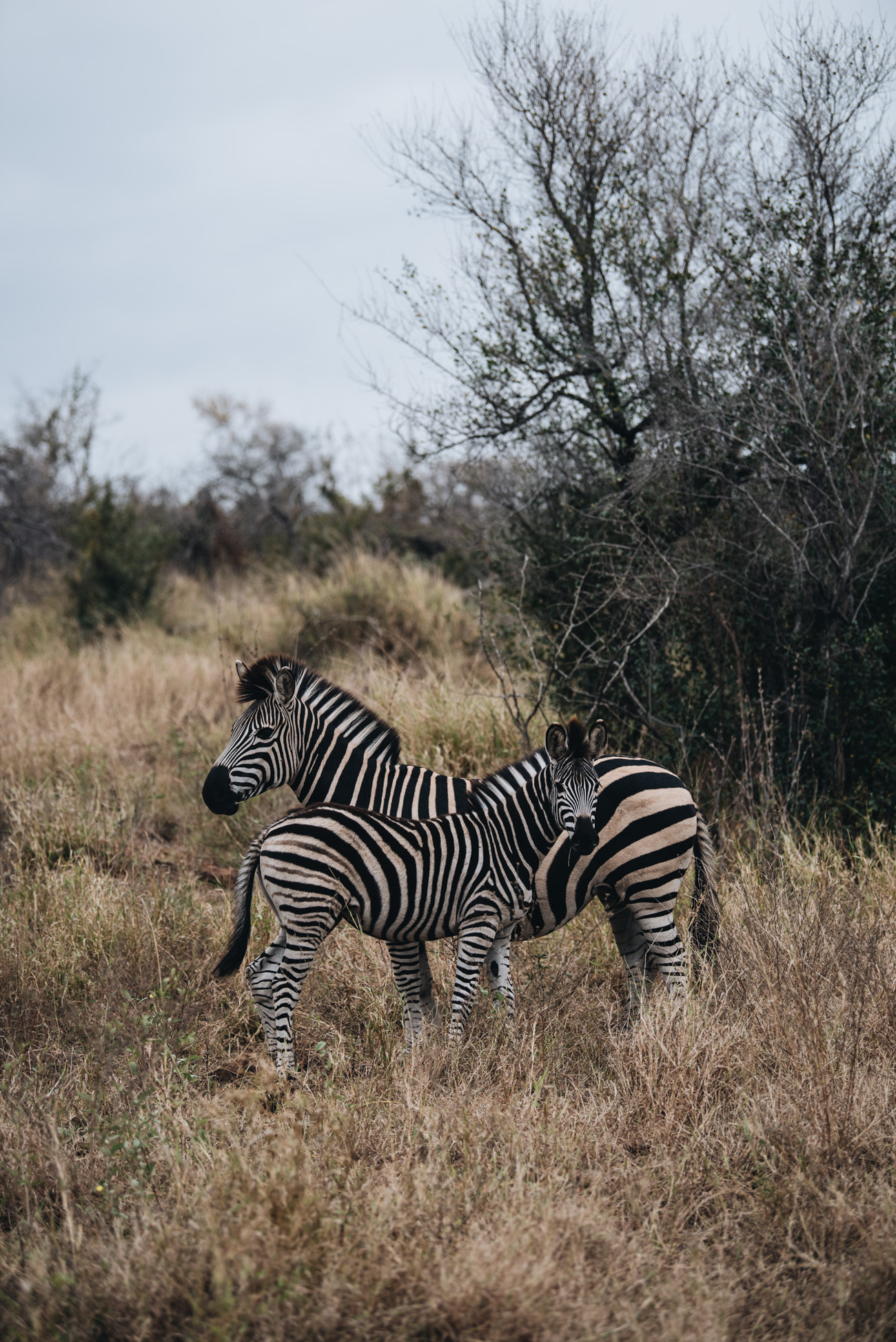 Singita-Safari-Krüger-Nationalpark-südafrika-lebombo-und-sweni-lodge-hotelbericht-erfahrung-reise-tipps-und-tricks-für-eine-safarireise-travel-blogger-nina-schwichtenberg-fashiioncarpet_1