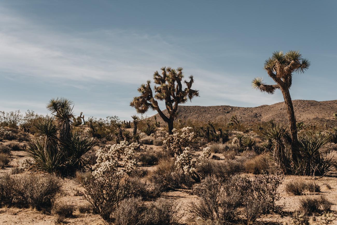 Joshua-Tree-Park-Kalifornien-Landschaft-Nutur-pflanzen-nina-schwichtenberg-fashiioncarpet