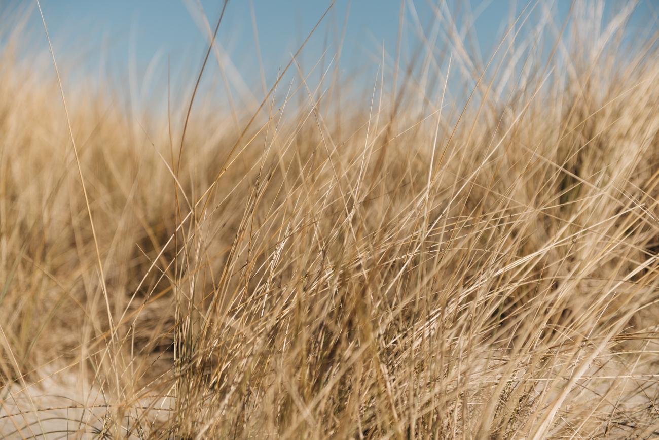 Dünen am Ostsee Strand