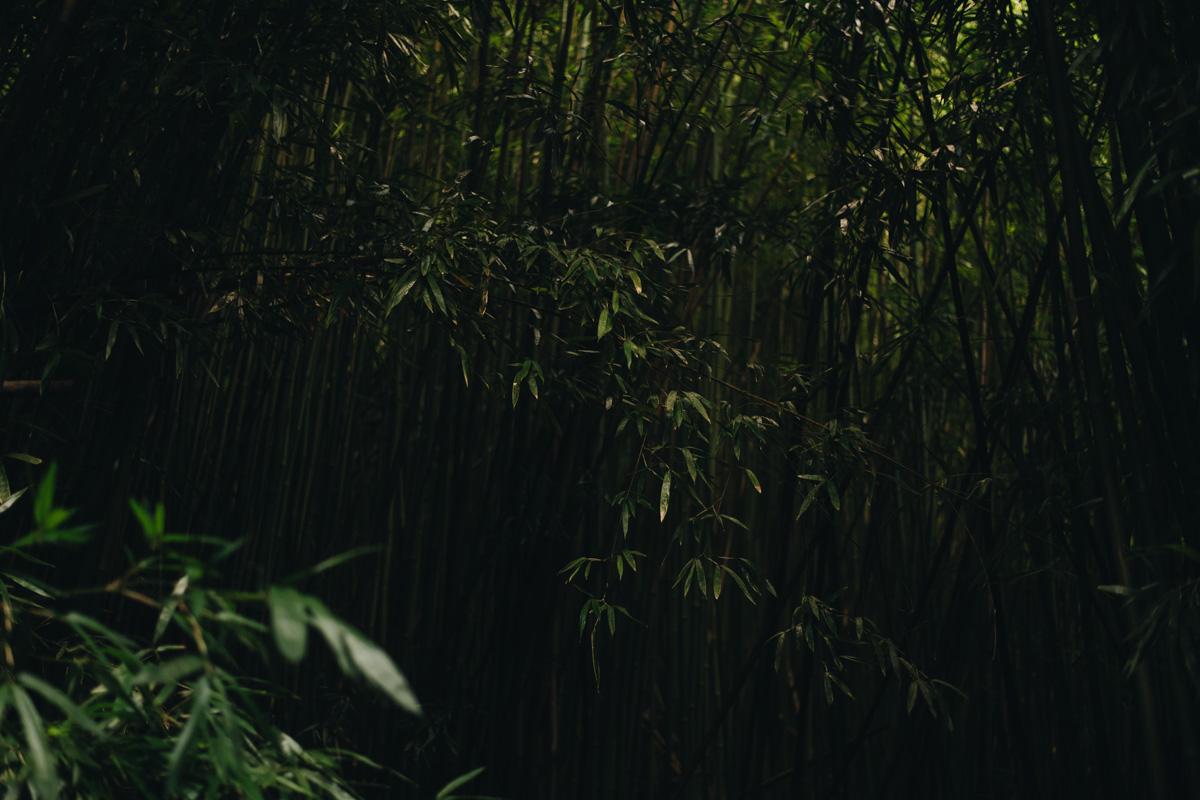 bamboo forest Haleakala National Park Kipahulu