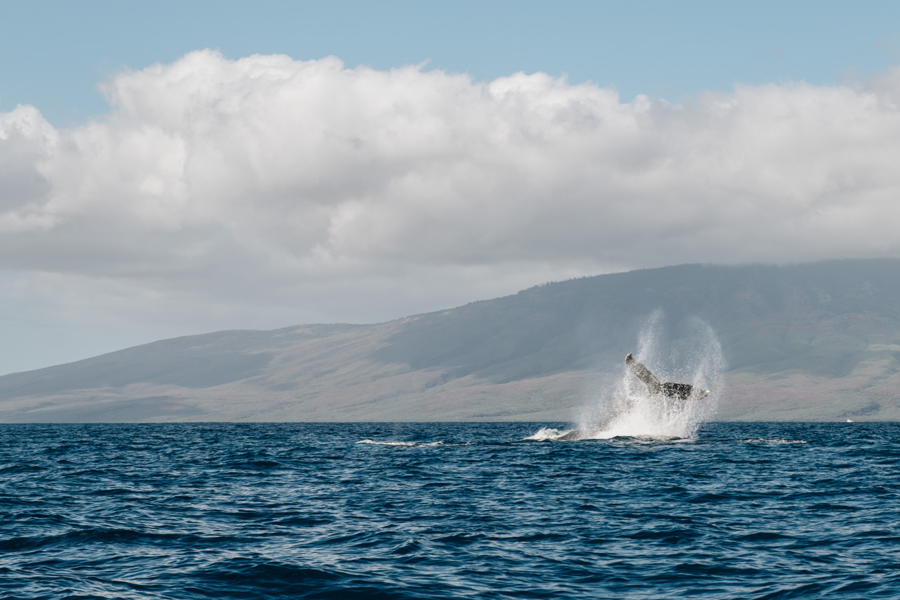 Wal Tour auf Maui