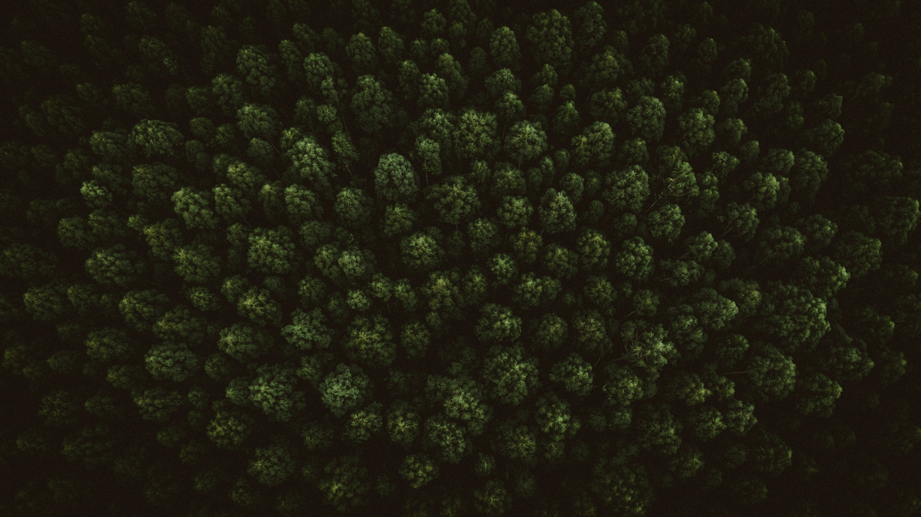 Wald von oben