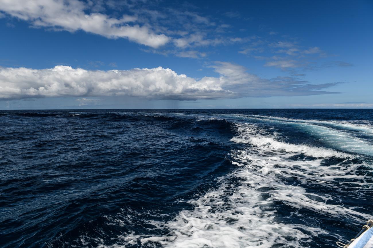 Big Island Delfin Tour schnorcheln