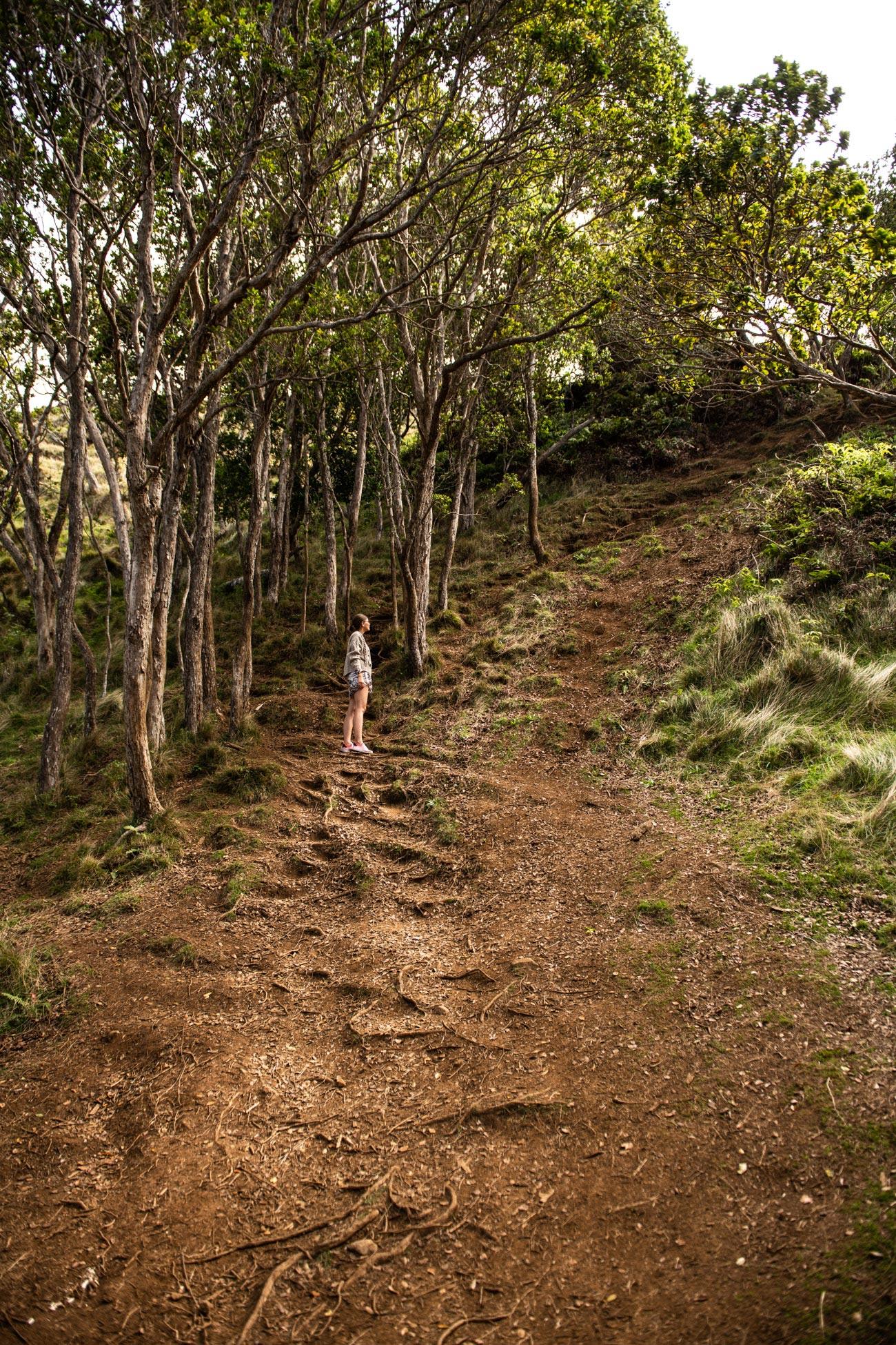 Kauai Kalalau Valley Hidden Hike