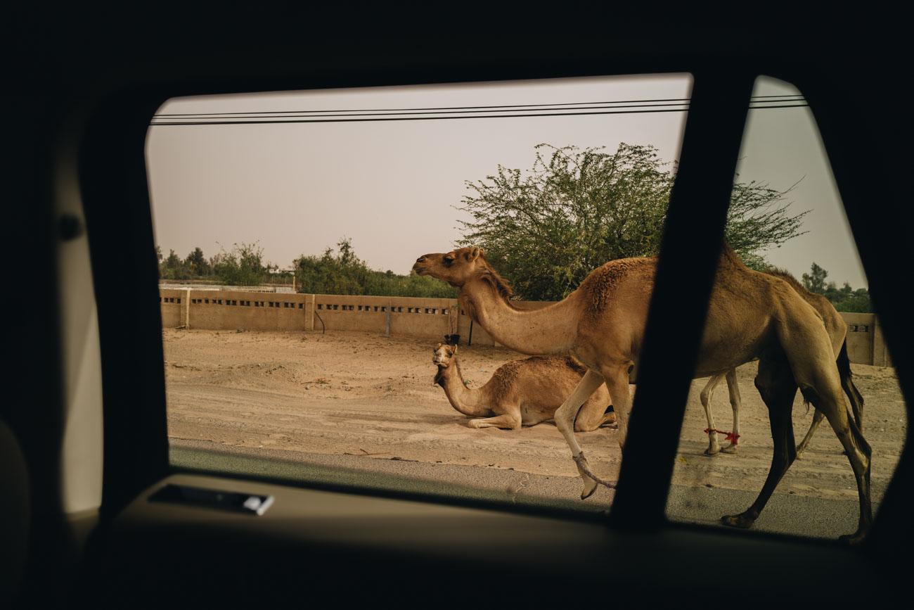 Dubai Wüsten Tour mit Kamelen