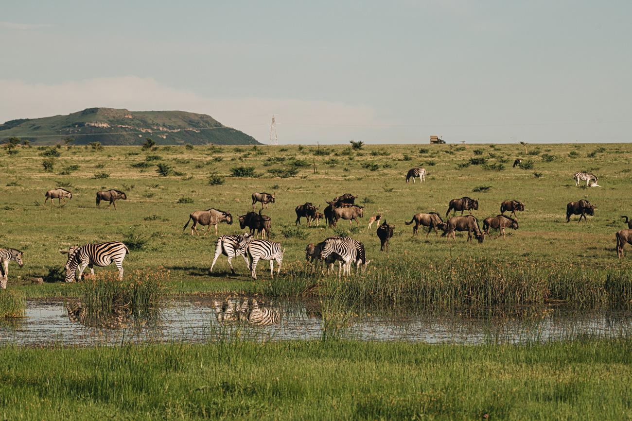 Safari im Sommer