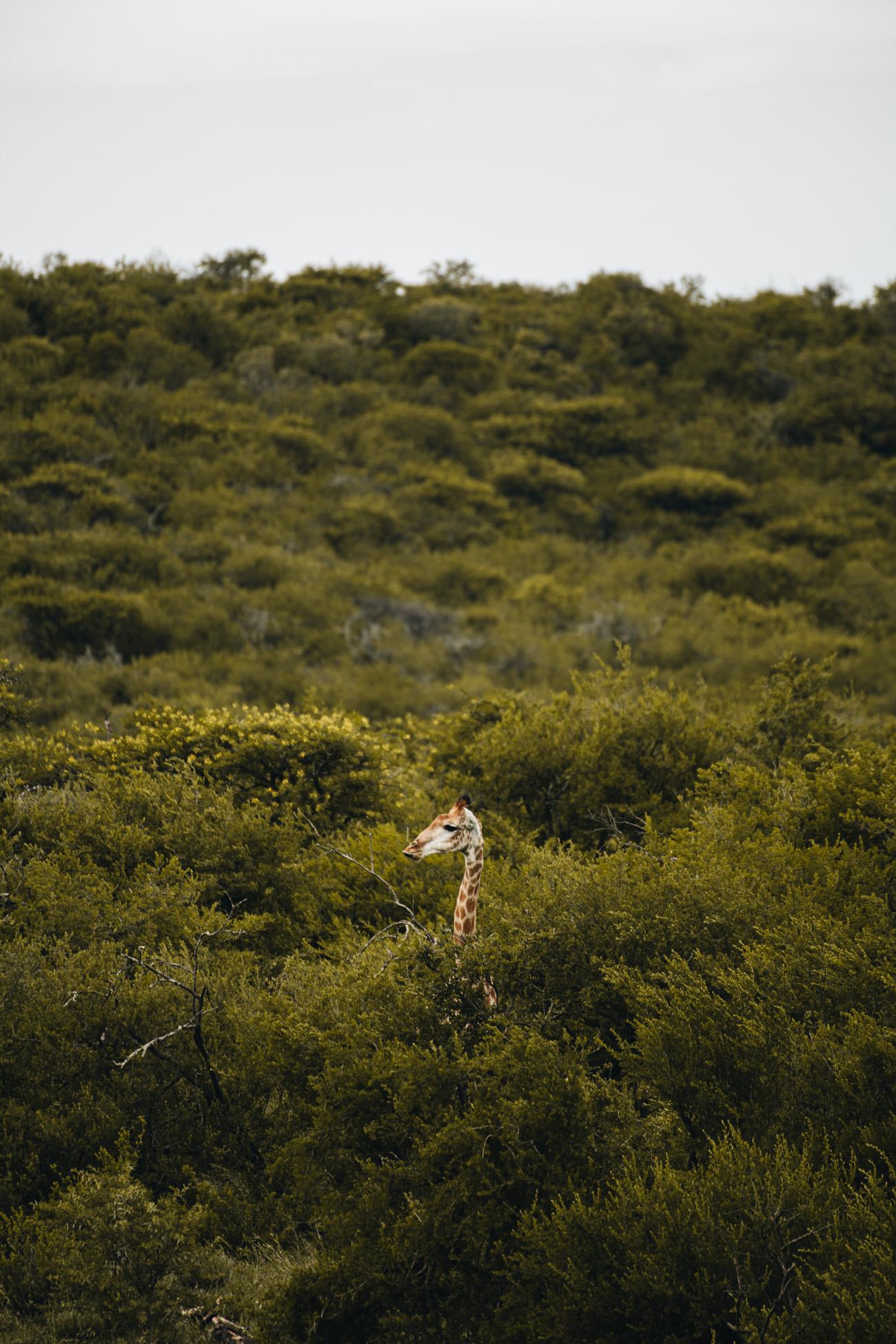 Safari in Durban