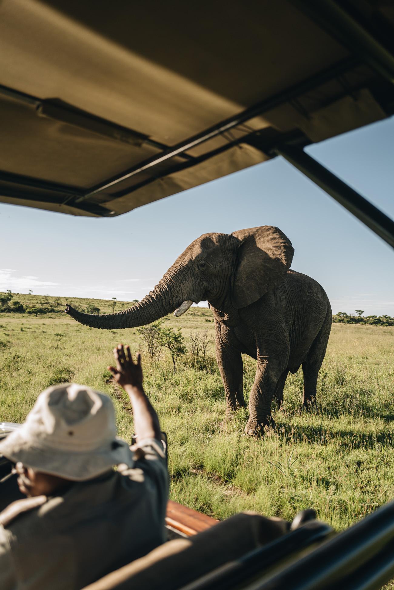 Safari Big 5 Elefant