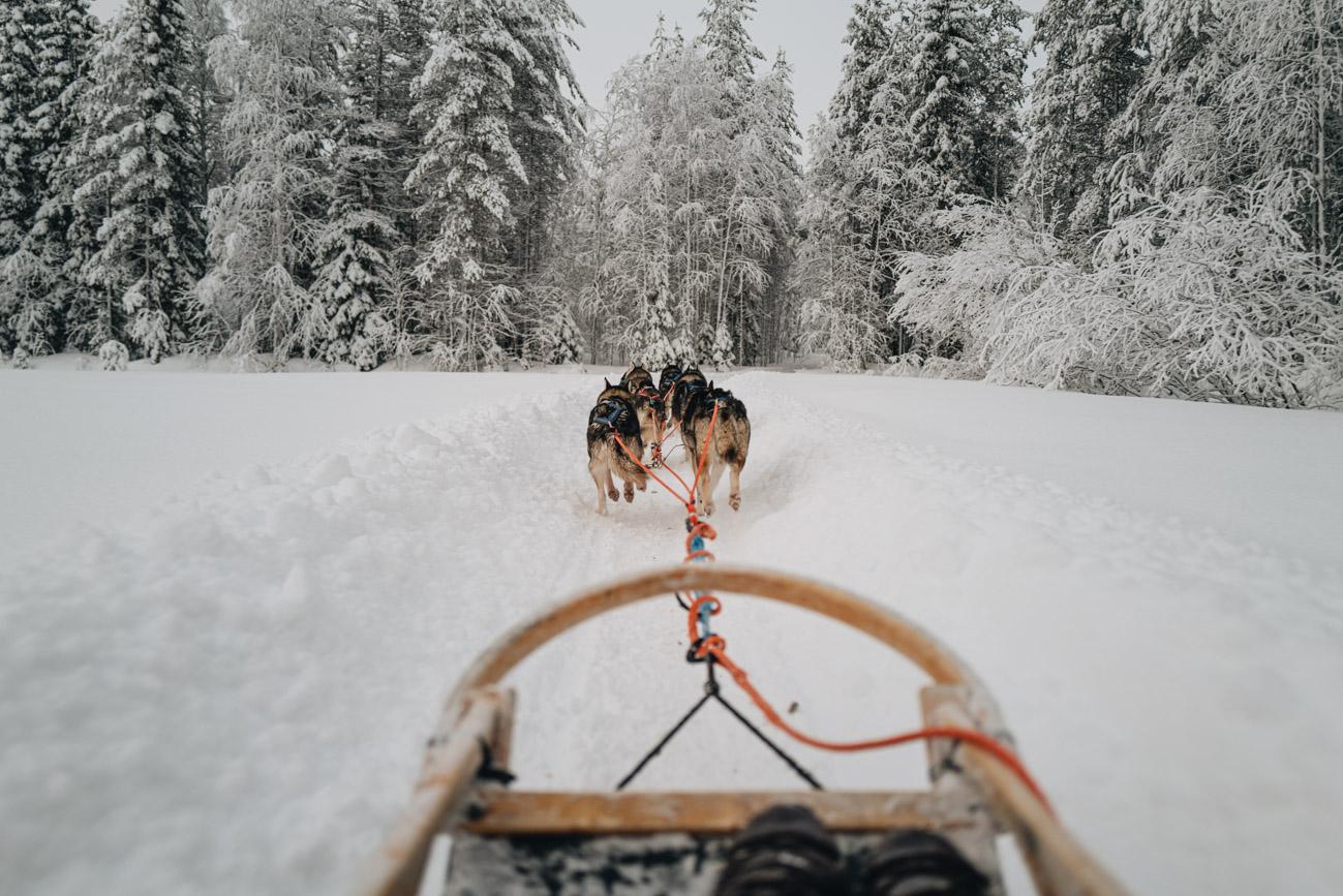 Husky Schlitten Tour Lappland