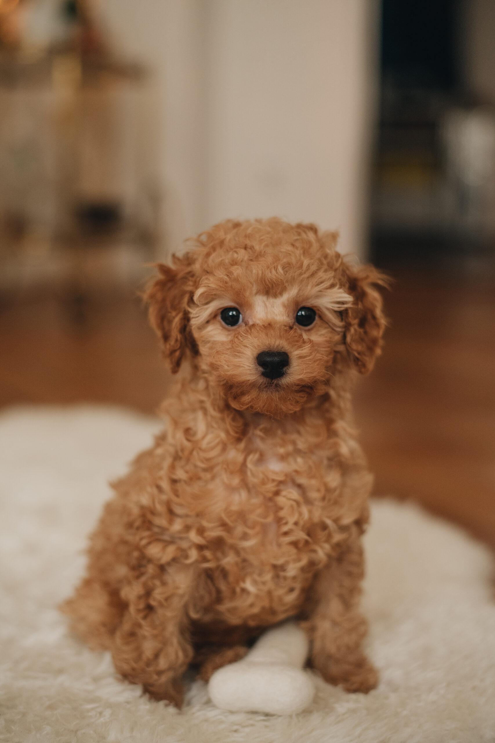Erstausstattung-Hunde-Welpen-spielzeug-hundebett-fashiioncarpet